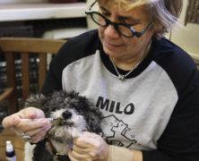 CBD in der Versorgung von Hunden
