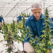 Sondernummer zum Thema Cannabis und Epilepsie