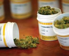 Zahl der Cannabisverschreibungen steigt, Preise könnten sinken