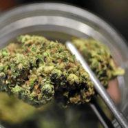Portugiesische ÄrztInnen befürworten medizinisches Cannabis