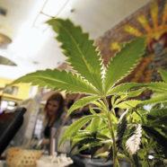 Rückschritt in Spanien Aus für spanische Cannabis Clubs