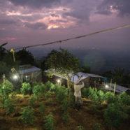 Medizinisches Cannabis in Peru angekommen