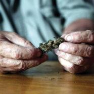 Cannabispatient stellt Entschließungsantrag für neue Cannabisregelung
