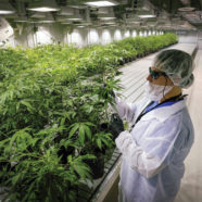 Medical-Cannabis-Bürgerinitiative erfuhr Begräbnis dritter Klasse im Parlament
