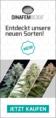 DinaFem Seeds Neue Sorten