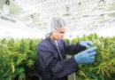 Von synthetischem Gras zur Legalisierung