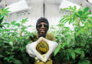 Jamaika: Cannabisindustrie entsteht