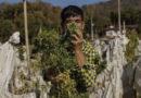 Lockerung der Gesetze in Asien