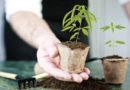 Basteln an Österreichs neuen Cannabisregelungen