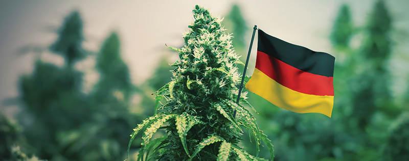 Deutsche Parteien sind mehrheitlich für die Legalisierung