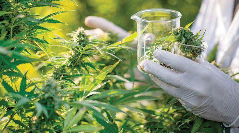 Was macht Cannabis medizinisch?