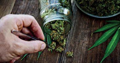 Medizinisches Cannabis reduzierte epileptische Anfälle um 97 %